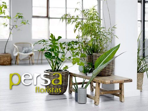 Plantas de interior de casas baar plantas de interior - Vitaminas para plantas de interior ...