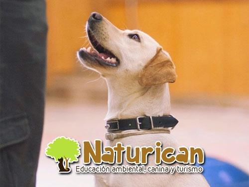 Charla gratuita de Educación canina