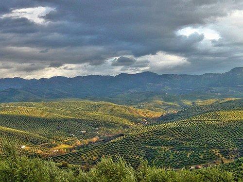 Visita guiada a un olivar ecológico de Baeza + Desayuno o merienda campestre