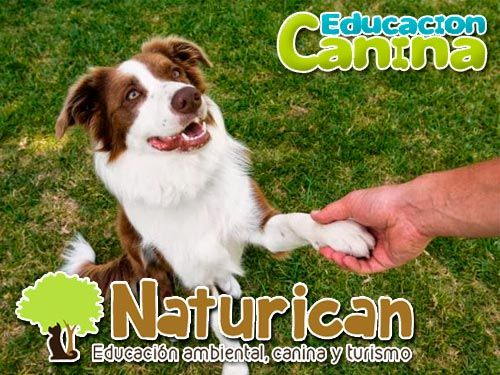 Educación canina Gratis si contratas este mes de Diciembre y hasta el 6 de Enero, con Naturican
